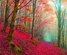 Pink Forestry