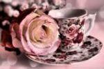 Rose peddle