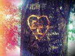 Etched On A Tree