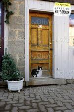 Cat in the door