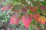 Autumn Reds 61