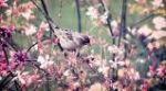 Spring & Swallow 4