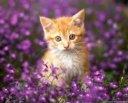 Kittens in Purples