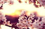 sunset daydreams