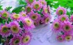 virágok_10