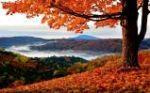 Autumn Coat 2