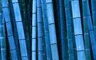 Whisper Bamboo