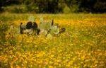 Cactus + Wildflowers