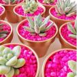 Cacti & Pink Rocks 2