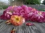 rose pile 1