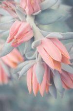 GR-Wiosenne kwiaty