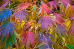 Capturing Autumn