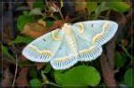 Lady bird moth