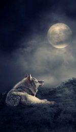 Full Wolf Moon - JAN