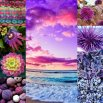 My Color Collage2