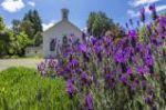 Summer of Lavender