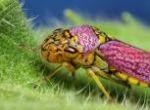 insecto tenebroso