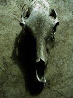 bones in the barn