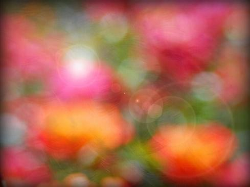 Rose Bokeh Texture with Flare