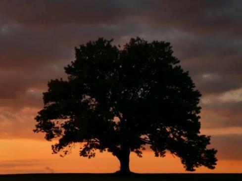 my tree at dusk