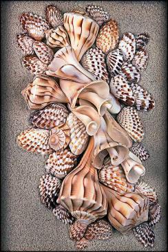 Shells Opus04
