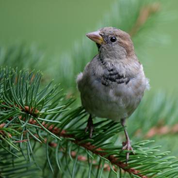 The beauty of a sparrow...
