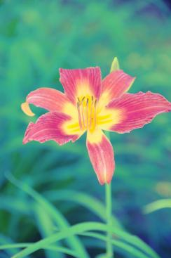 Lily ( the trip to Texas 46 )