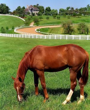 "Lexington Kentucky - Donamire Farm ""The Good-Life for Horse"""