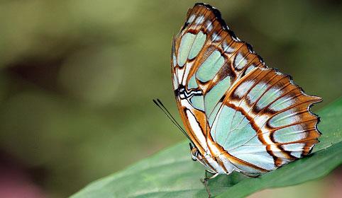 Kelebek kışın