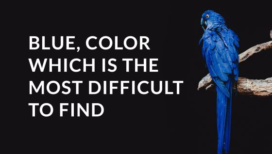 Blue is the warmest color, yet the most difficult to find