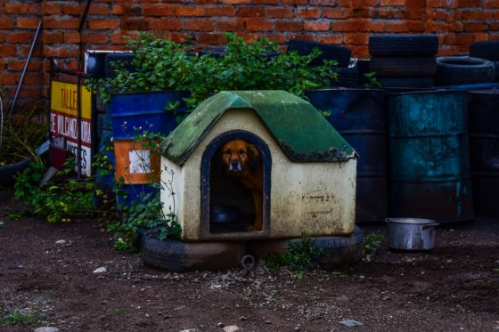 4 Color-Combinations And 2 Recommendations For Painting Your Dog House