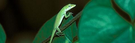 Color Symbolism: Green