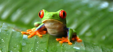 Beautiful Color in Nature:  Frogs and Toads