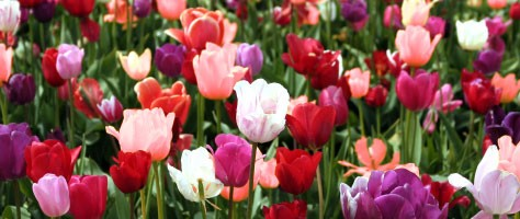 Flower Color Theory: White, Red, Pink and Green