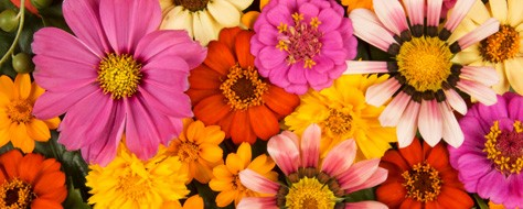 The Meanings of Flower Colors