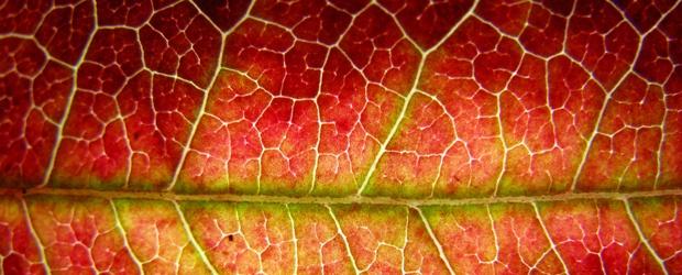 Autumn Foliage Color Palettes
