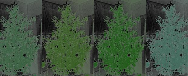 Inspiration: 36 Christmas Tree Greens