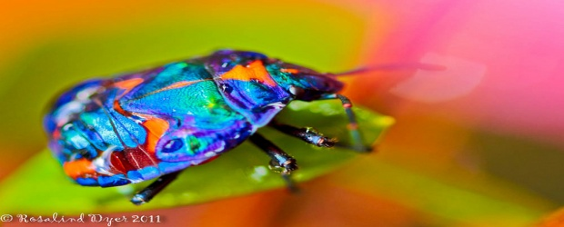 Color Inspiration in Nature: Insects Infused with a Rainbow of Hues
